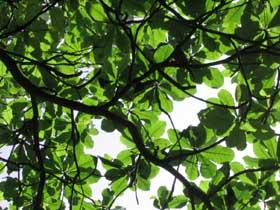 leafs2.jpg